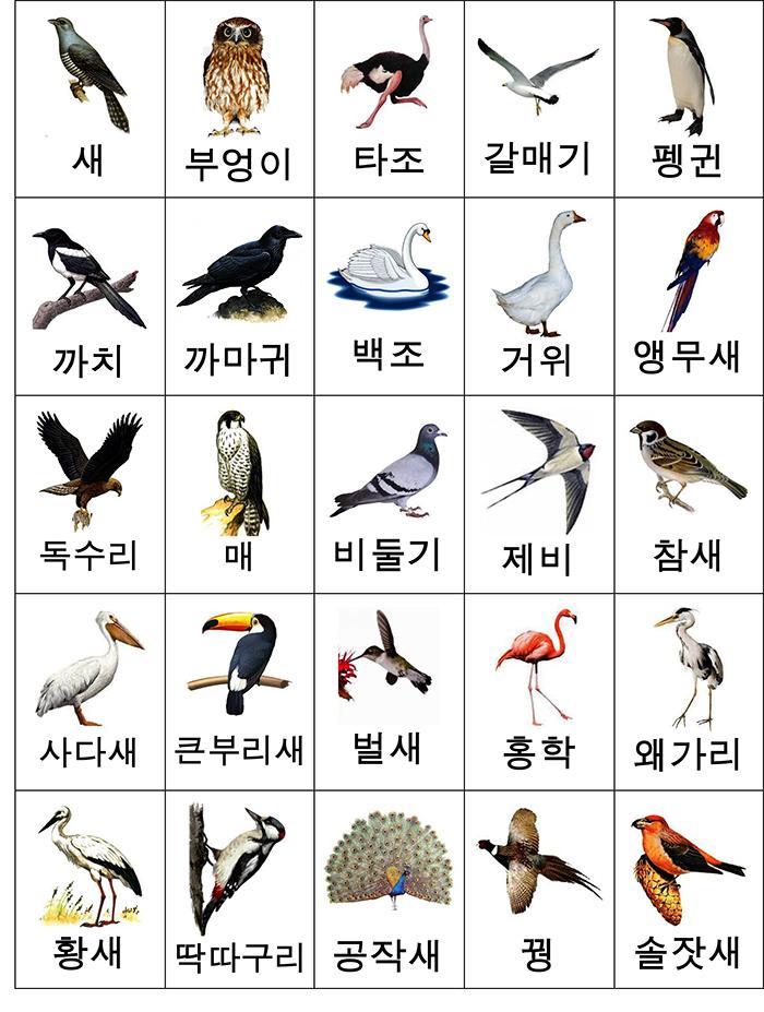 лексика птицы карточки-2