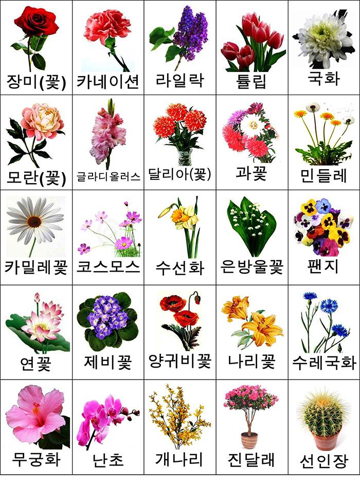 лексика цветы карточки -2